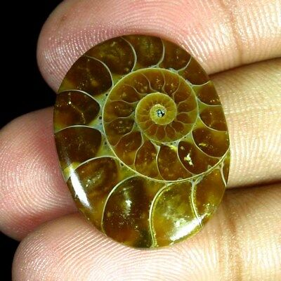 27.35 Ct 100% Natural Ammonite Oval Cabochon Original Fantastic Gemstone