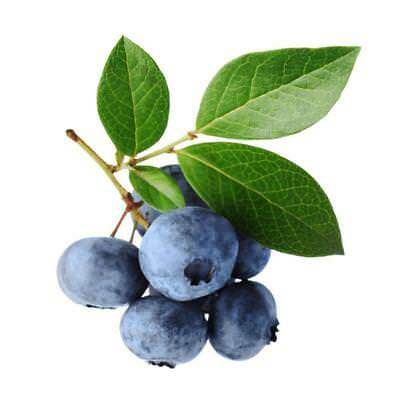 20Pcs Outhern Blueberry Seeds * Evergreen Shrub * High Tolerance To Heat Set