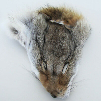 authentic LARGE WILD COYOTE HEAD FACE PELT real taxidermy tanned skin and fur