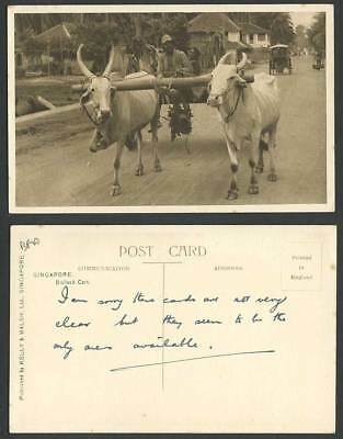 Singapore Old Postcard Malay Double Bullock Cart Native Driver Street Scene Oxen