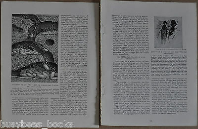 1912 magazine article about Ants, biology, sociology etc, comparison to humans