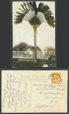 Singapore KG5 4c 1930 Old Real Photo Postcard Traveller Palm Travellers' Tree RP