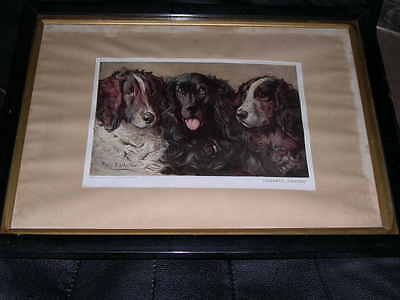 Large Antique Field & Springer Spaniel Dog Picture By Stretton 1910 Ltd Edition