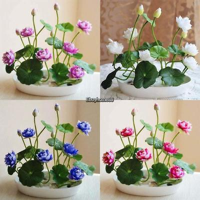 New Nice Adorable Flower Fragrant Blooms Colorful Lotus Seeds EHE8