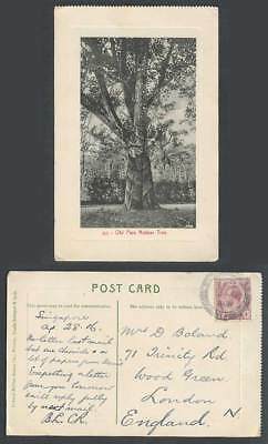 Singapore KG5 4c 1916 Vintage Postcard Old Para Rubber Tree, with Tapping Marks