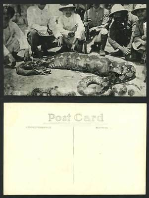 Singapore Old Real Photo Postcard Hunter Hunting A Python SNAKE with BIG STOMACH