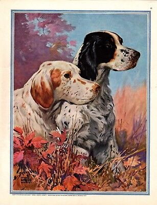 1932  SATURDAY EVENING POST MAGAZINE PRINT by LYNN BOGUE HUNT  BIRD DOGS   A174