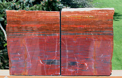 SiS: VIBRANT RAINBOW COLOR 8+ lb. ARIZONA Petrified Wood RIP CUT Bookend Set!!