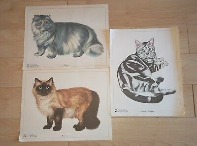 "Vintage Set of 3 CAT PRINTS BY Purina Artist E. HOY 14"" X 11"""
