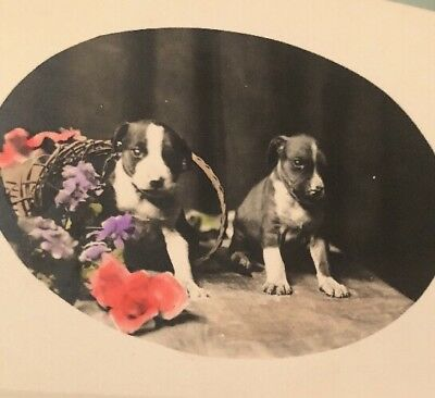 Antique Vintage Early 1900's RPPC Original Pit Bull Dog Puppy Postcard