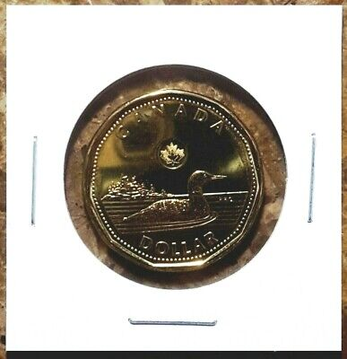 Canada 2012 New Generation Style Loonie BU UNC From Mint Roll!!