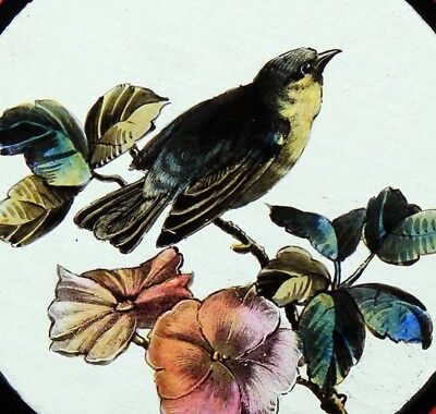 Beautiful English Painted Bird In Blossom Antique Stained Glass Window