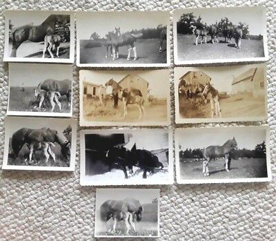 Lot of 10 Vintage Photo Snapshots, Many Horse with Foal, approx 1930's-40's B&W