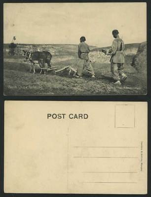 China North Old Postcard Farmers Donkeys Farming Plough