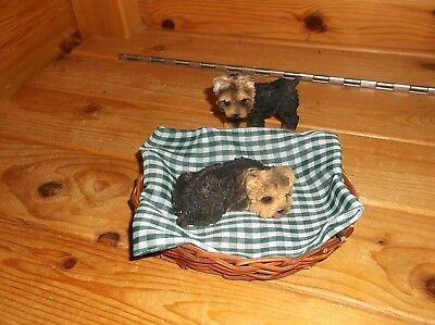 Yorkshire Terrier / Yorkie Puppies With Bed