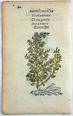1551 Leonhard FUCHS 2 Woodcuts Nettle &  Small Nettle ORIGINAL hand colour
