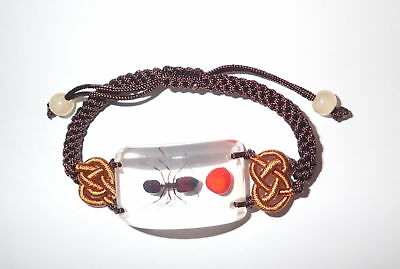 Insect Bracelet Big-head Ant Specimen with Lucky Red Seed SL15 Clear