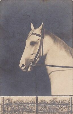 Old Vintage Postcard Rp White Horse Farm Animal Bt4