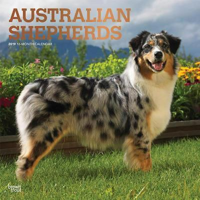 Australian Shepherds 2019 Square Wall Calendar by Inc Browntrout Publishers Free