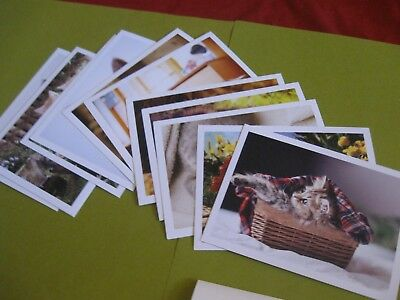 "lot of 12 cat postcards by Laverton *NEW* high quality 4""x 5.5"""