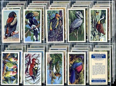 Trade Card Set, Brooke Bond Tea, TROPICAL BIRDS, Exotic, Parrot, Flamingo etc