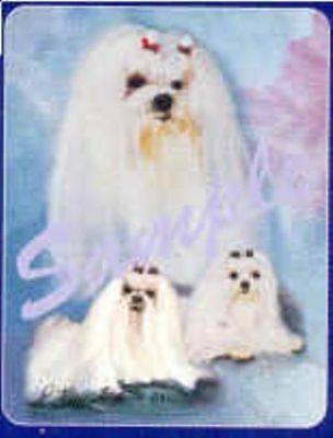 Dog Breed Playing Cards MALTESE Game Cards CLEARANCE SALE