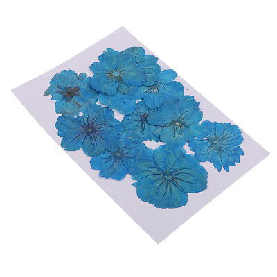 12 Pcs Dyed Blue Pressed Dried Sakura Flowers Cherry Blossom for Art Crafts