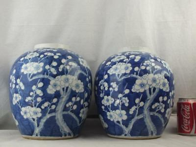 Large Pair 19Th C Chinese Porcelain Blue And White Prunus Jars