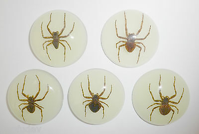 Insect Cabochon Ghost Spider Specimen 35 mm Round Glow 5 pieces Lot
