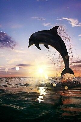 """Jumping Dolphin Fabric Poster  20x13""""  Decor 16"""