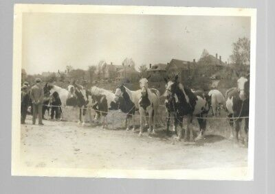 5X7 Vintage Horse Photo #2 Black And White B/w Unknown Horses Photo #2