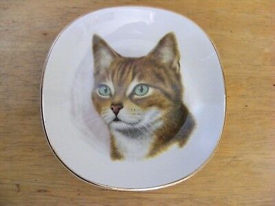 Weatherby Hanley Royal Falcon Ware Cat Plate Trinket Dish Support Wildlife Rehab