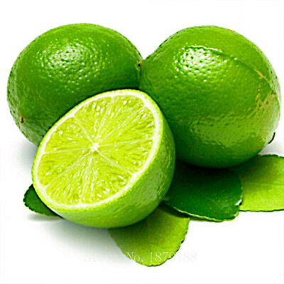 Thai Organic Key Lime Aurantifolia Seeds Citrus Lemon Seeds Fruit Seeds 20PCS