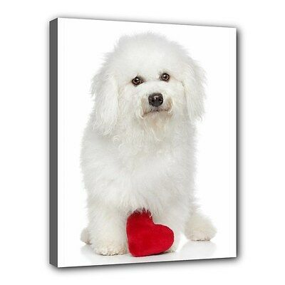 "BICHON FRISE Dog Art Portrait Photography11""x14"" CANVAS PRINT Wall Home Decor"