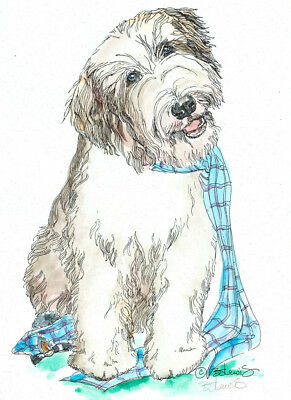 BEARDED COLLIE Original Watercolor on Ink Print Matted 11x14 Ready to Frame