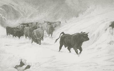 'THE VANGUARD' MacWHIRTER & CO MURRAY CATTLE ~ Antique Etching Art Print GEM! @@