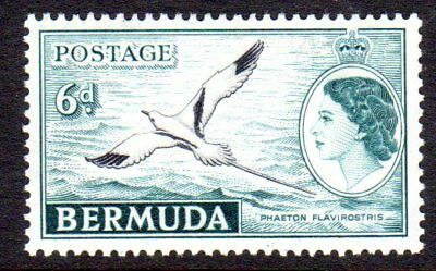 1953-62 BERMUDA 6d white-tailed tropic bird SG143 mint very light hinged