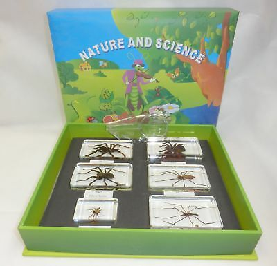6 Spider Specimen Collection Box Set TES6  6 blocks Real Insect Education Kit