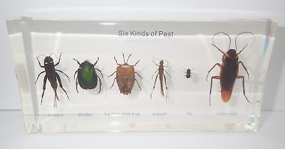 Six Kinds of Pest Insect Set in Clear Block Education Real Specimen