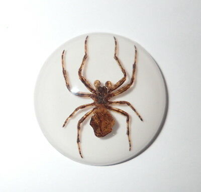 Insect Cabochon Ghost Spider 35 mm Round on white bottom 1 piece Lot