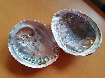 2 Abalone Shells From Vintage Family Collection