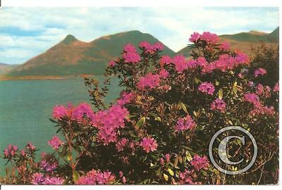 Loch Leven and the Pap of Glencoe, Scotland - postcard