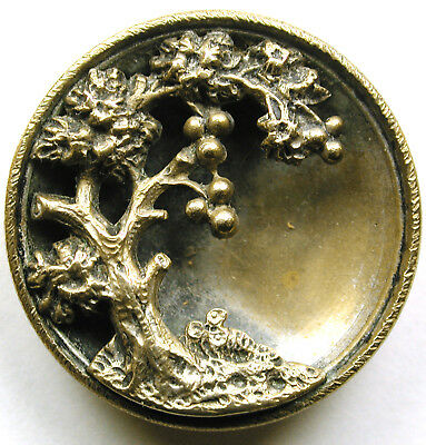 Antique Brass Button Apple Tree Over Brass Cup Design - 15/16""