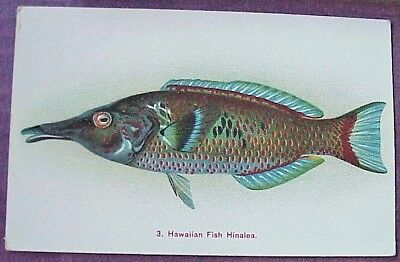 1910's Colorful Hawaiian Fish Hinalea TH Hawaii Steiner PMC #3