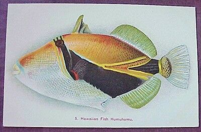 1910's Colorful Hawaiian Fish Humuhumu TH Hawaii Steiner PMC #5