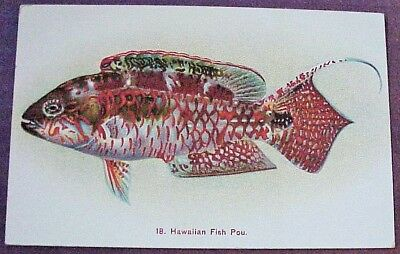 1910's Colorful Hawaiian Fish Pou TH Hawaii Steiner PMC #18