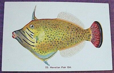 1910's Colorful Hawaiian Fish Oili TH Hawaii Steiner PMC #23
