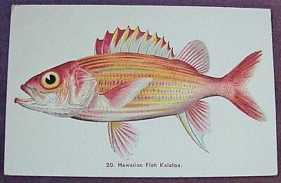 1910's Colorful Hawaiian Fish Kalaloa TH Hawaii Steiner PMC #20