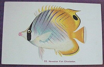 1910's Colorful Hawaiian Fish Chaetodon TH Hawaii Steiner PMC #22