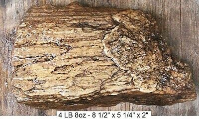 IDAHO - 4 LB 8 oz RARE MOUNT HARRISON QUARTZ PETRIFIED WOOD LOG - ALL NATURAL